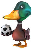 Fun duck Royalty Free Stock Photo