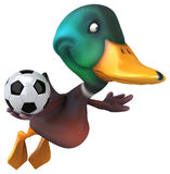 Fun duck Royalty Free Stock Image