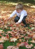 Fun fall leaves. Small child has fun playing in fall leaves; childhood; autumn royalty free stock photo