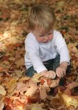 Fun fall leaves. Small child has fun playing in fall leaves; childhood; autumn stock photos