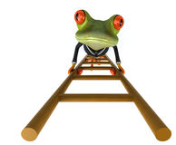 Fun frog Royalty Free Stock Images