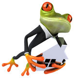 Fun frog Stock Images