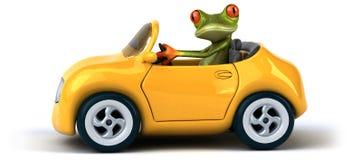 Fun frog Stock Photos