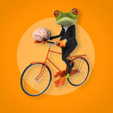 Fun frog Royalty Free Stock Image