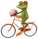 Fun frog Royalty Free Stock Photos