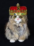 Fun and Funny Pet House Cat with King Crown Royalty Free Stock Image