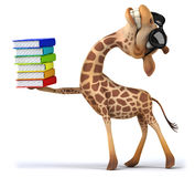 Fun giraffe Stock Photos