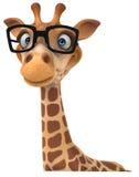 Fun giraffe Royalty Free Stock Photo