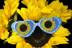 Fun Glasses Royalty Free Stock Photos