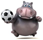 Fun hippo Royalty Free Stock Images