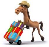 Fun horse Stock Images