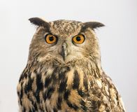 The 2017 Photoplus Expo. A fun and instructive activity engaged a large owl, with his handler, and served as an opportunity to teach lighting and other royalty free stock images