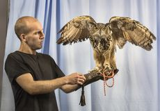 The 2017 Photoplus Expo. A fun and instructive activity engaged a large owl, with his handler, and served as an opportunity to teach lighting and other stock photos