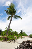 FUN ISLAND, MALDIVES: Exotic Palm Tree on White Sand Beach. Republic of Maldives is an island country and archipelago in the Indian Ocean. It lies southwest of Stock Photo