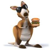 Fun kangaroo Royalty Free Stock Images