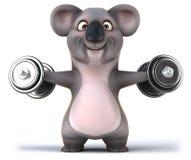 Fun koala Royalty Free Stock Photo