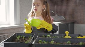 Fun little gardener care for plants. Cute little child girl planting seedlings. Spring concept, nature and care. Fun little gardener care for plants. Cute stock footage