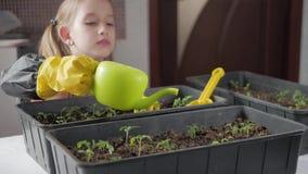 Fun little gardener care for plants. Cute little child girl planting seedlings. Spring concept, nature and care. Fun little gardener care for plants. Cute stock video