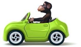Fun monkey Royalty Free Stock Photo