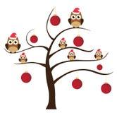 Fun Owl Stock Images