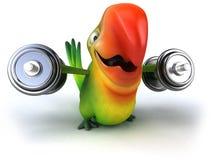 Fun parrot Stock Images