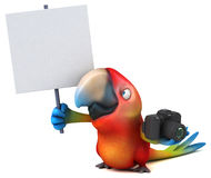 Fun parrot Royalty Free Stock Images