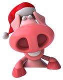 Fun pig Stock Photography