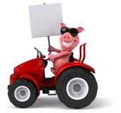 Fun pig Stock Photo