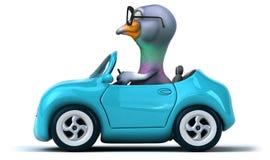 Fun pigeon Stock Image