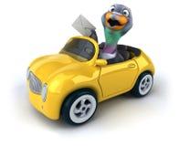 Fun pigeon Royalty Free Stock Images