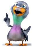 Fun pigeon Stock Photo