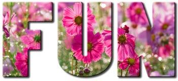 Fun Pink Flowers Stock Photo