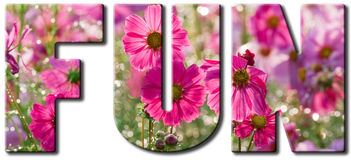 Fun Pink flowers Stock Photo