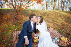 Fun portrait of happy wedding couple in autumn forest, sitting o Stock Images