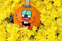 Fun pumpkin in yellow mums Royalty Free Stock Photos