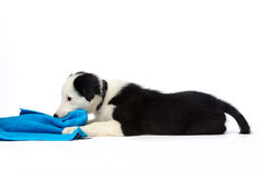 Fun with puppy Stock Photo