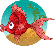 Fun red fish Stock Photography