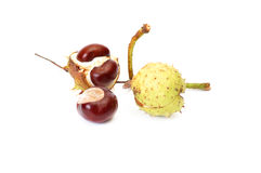 Fun ripe chestnuts on a white. Stock Images