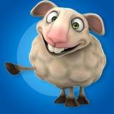 Fun sheep Stock Photos