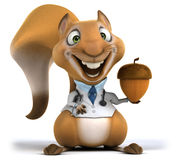 Fun squirrel Royalty Free Stock Photography