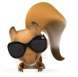 Fun squirrel Stock Photos