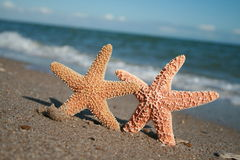 Fun In The Sun. Two starfish in the sun on the beach. The background is out of focus Royalty Free Stock Images