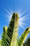 Fun sun and green leaves of palm. Stock Photos
