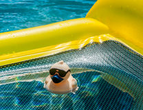 Rubber Duck in Water. Rubber Duck with sunglasses floats on a raft in a pool on a sunshiny day Royalty Free Stock Image