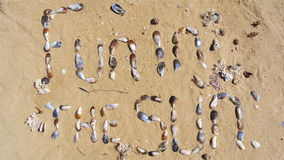 Fun in the sun. These words FUN IN THE SUN was created using seashells and arranging them on wet beach sand. There is text, seashells, wet beach sand and some Royalty Free Stock Photography