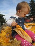 Little girl and of corn stock photography