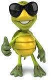 Fun turtle Royalty Free Stock Image