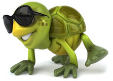 Fun turtle Stock Photos
