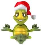 Fun turtle Royalty Free Stock Photo
