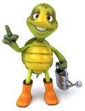 Fun turtle Royalty Free Stock Photography